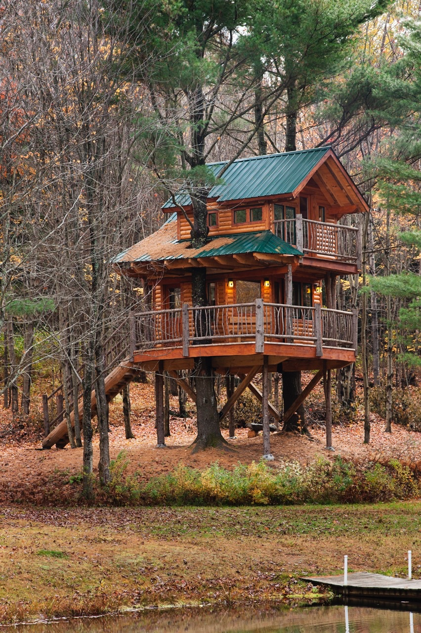 treehouse moose